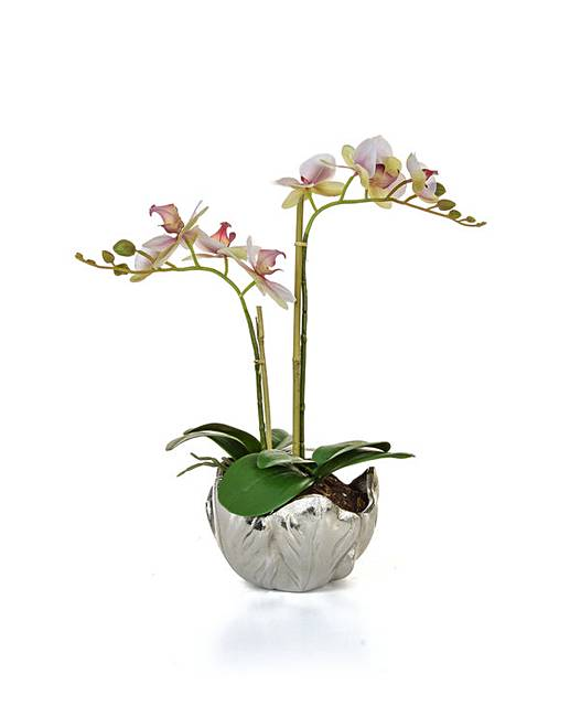 Artificial Phal Orchid In Silver Vase Fashion World