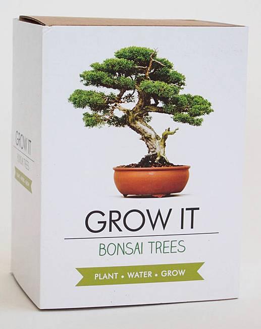 Bonsai Tree Grow It Kit