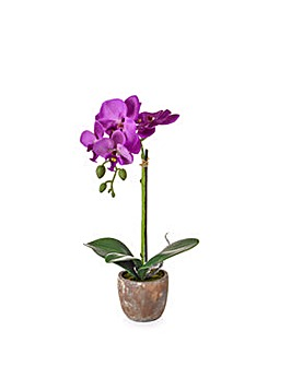 Artificial Victoria Orchid in Pot