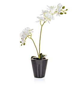 Artificial Phalaenopsis Orchid in Bk Pot