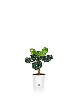 Artificial Caladium in Round Rato Pot