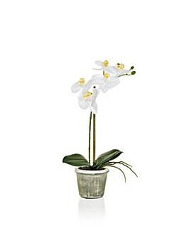 Artificial Phalaenopsis Orchid in Pot