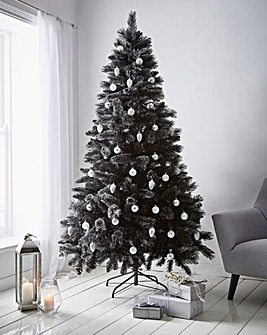 Black Tipped Fir Tree With Cashmere tips
