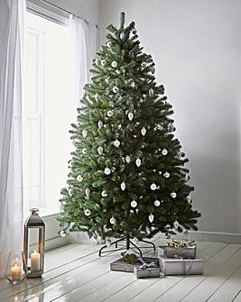 California Spruce Tree