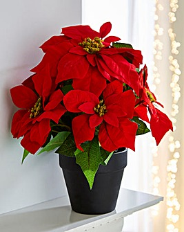 40CM Poinsettia in Pot