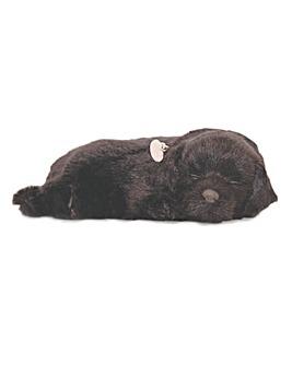 Tactile Pet Black Labrador