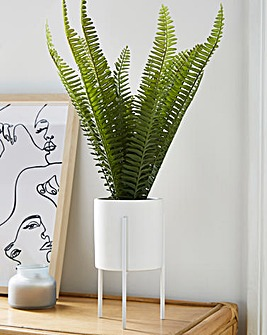 Fiori Fern Pot With Iron Stand