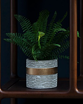 Fiori Boston Fern With Cement Pot