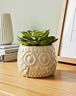 Fiori Grey Large Owl Pot With Succulent