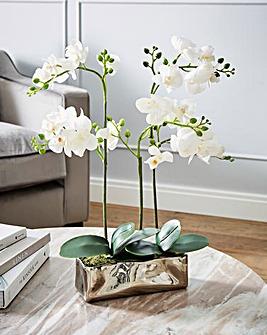 Fiori White Orchid Plant