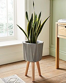 Darnell Planter Grey With Natural Beech Wood Legs