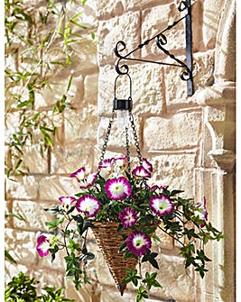 Ready Made Petunia Conical Hanging Baske