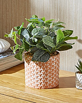 Green Plant in Red Cement Pot