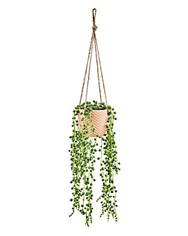 String of Pearls in Hanging Planter