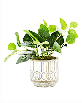 Evergreen Leaves in Rustic Pot