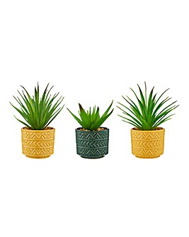 Set of 3 Vibrant Succulents