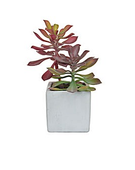 Artificial Succulent in Cement Pot