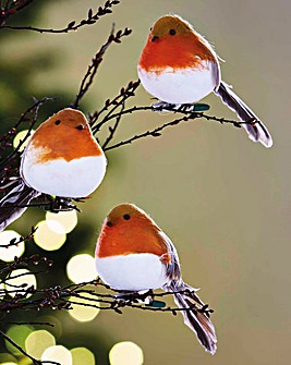 Robins Set of 6