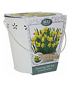 Daffodil Gift Bucket