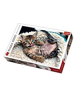 1000pc Kitten Puzzle