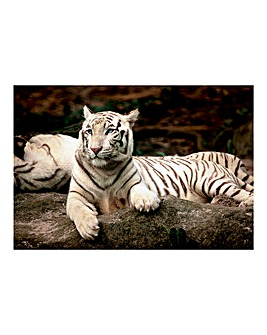 1500pc White Tiger Puzzle