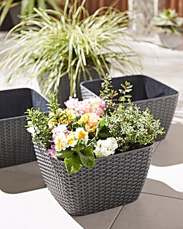 Set of 4 Square Rattan Effect Planters