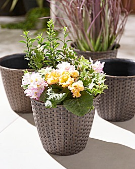 Set of 4 Rattan Effect Planters