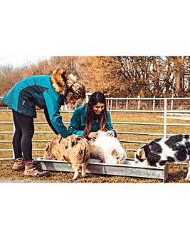 Kew Little Pigs - Piggy Pet & Play for 2