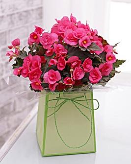 Pink Begonia Gift Bag
