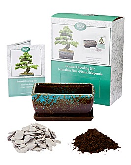 Grow Your Own Pine Bonsai Kit