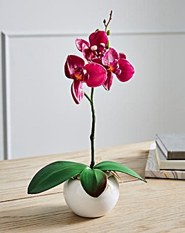 Orchid in a Ceramic Pot Purple