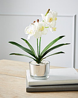 Orchid in a Glass Pot 26cm