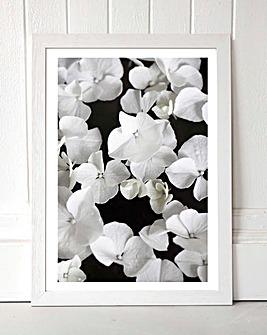 White Beauty on Black Wall Art