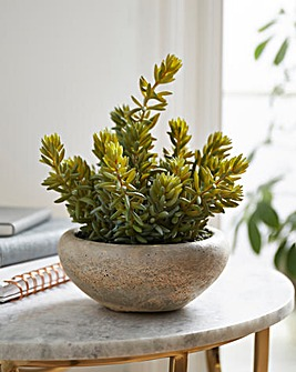 Sedum Green with Cement Bowl Large