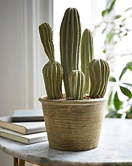 Cactus San Pedro Small