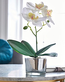 White Orchid in Silver Pot 26cm