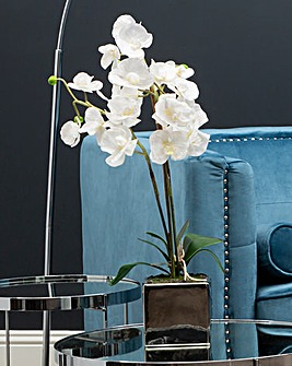 White Orchid Plant in Silver Ceramic Pot