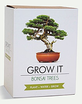 Bonsai Tree Grow It Kit