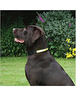 Premium Flashing Collar Yellow Large