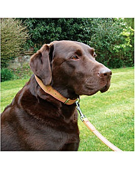 Wag n Walk Tan Leather Collar 22-26""