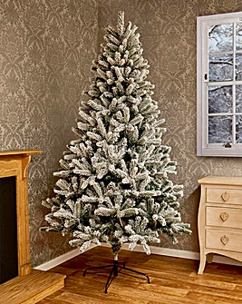 Evergreen Snow Fir Tree