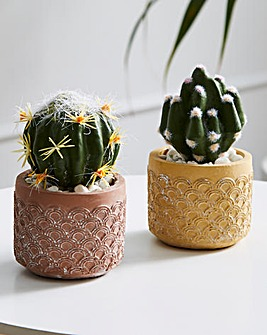 Set of 2 Round Cactus in Cement Pot