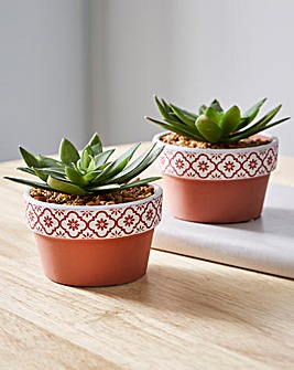 Set of 2 Succulent in a Pot
