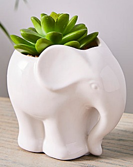 Plant in Ceramic Elephant Pot
