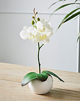 Orchid in a Ceramic Pot White