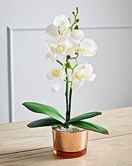 Orchid in a Glass Pot 28cm