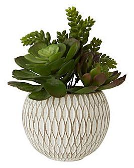 Fiori Mixed Succulent Pot