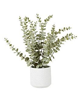 Fiori Eucalyptus Pot