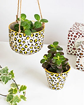 Leopard Planted set of two