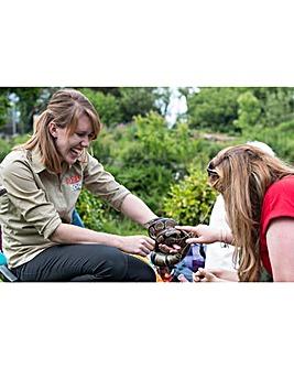 Reptile & Bug Experience, Dartmoor Zoo